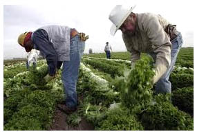 mexican-workers in the US